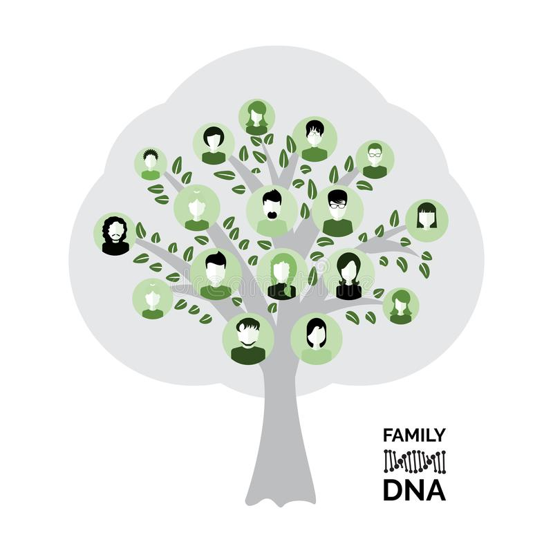 Genealogy tree for dna ancestors illustration isolated. Genealogical family tree with avatars isolated on white background. Genealogy tree for dna ancestors vector illustration