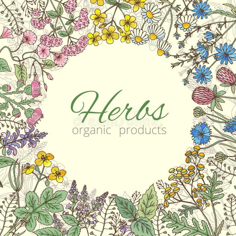 Geneeskrachtige, botanische en het helen schoonheidskruiden van tuin vectorillustratie als achtergrond vector illustratie