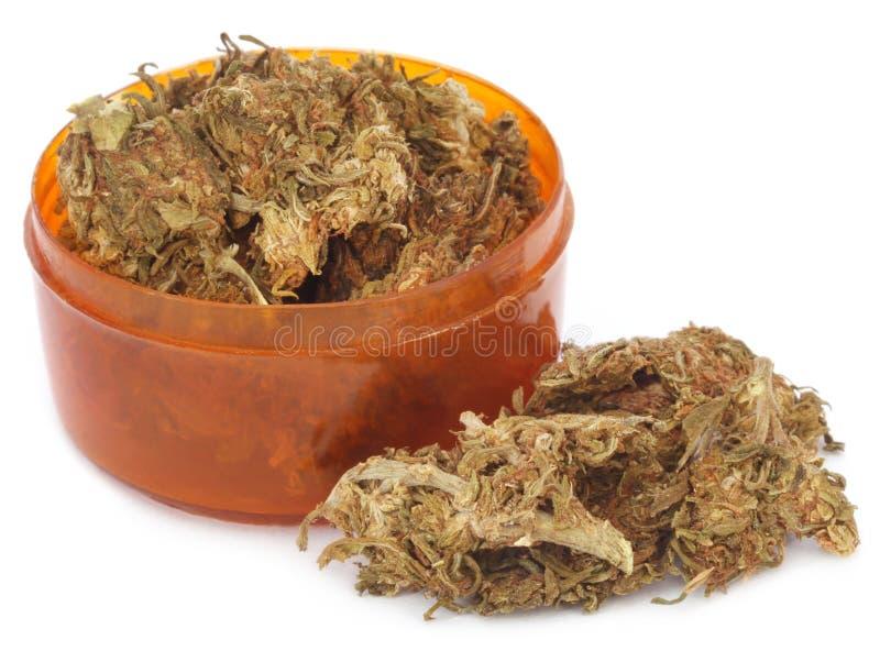 Geneeskrachtige cannabis of marihuana royalty-vrije stock afbeelding