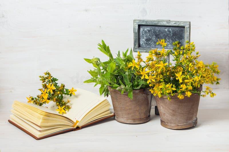 Geneeskrachtige kruiden in de pot en de tablet voor tekst royalty-vrije stock afbeelding