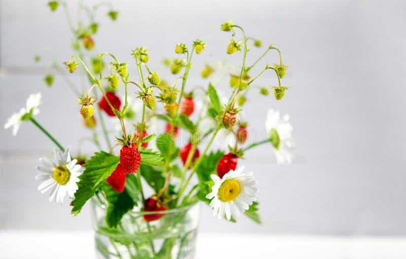 Geneeskrachtige kruiden: De takken van rode rijpe aardbeien, margrieten en muntbladeren bevinden zich in een glas water op een ho stock afbeelding