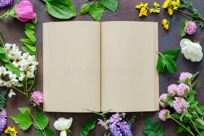 Geneeskrachtige kruiden en installaties, open leeg document boek royalty-vrije stock afbeeldingen