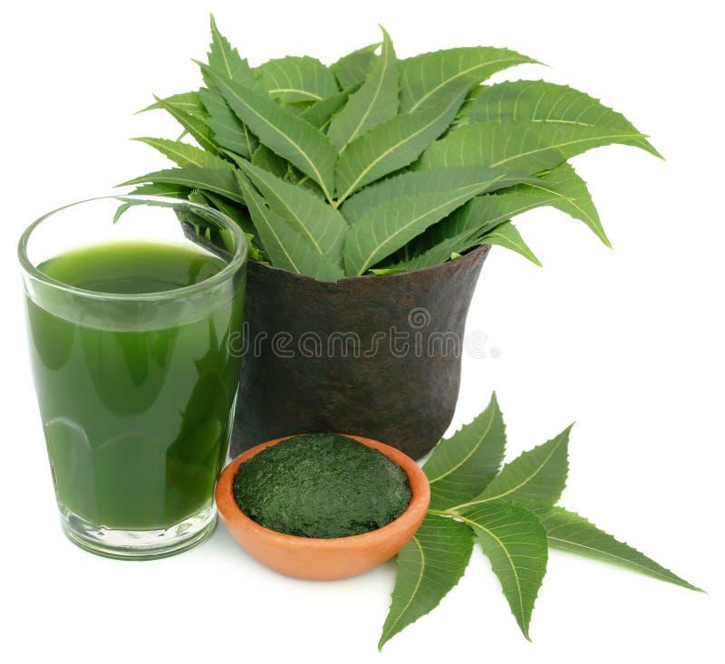 Geneeskrachtige neembladeren met uittreksel en gemalen deeg stock fotografie