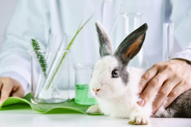 Geneeskundeonderzoek en het testen van bij konijn dierlijke, Natuurlijke organische kruidenextractiegeneeskunde, Veiligheidschemi stock fotografie