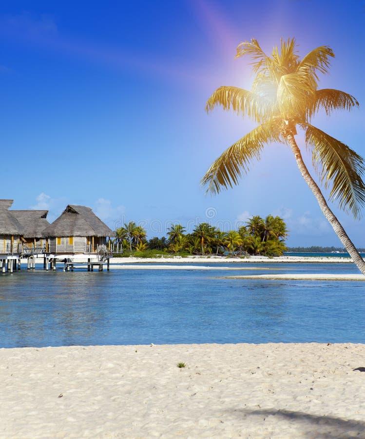 Geneigte Palme auf dem Strand und Häuser über Wasser im Meer Das Polynesien, Tahiti lizenzfreies stockfoto