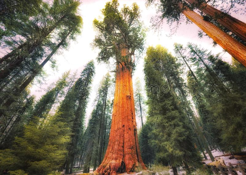 Generał Sherman Drzewo, sekwoja park narodowy zdjęcie royalty free