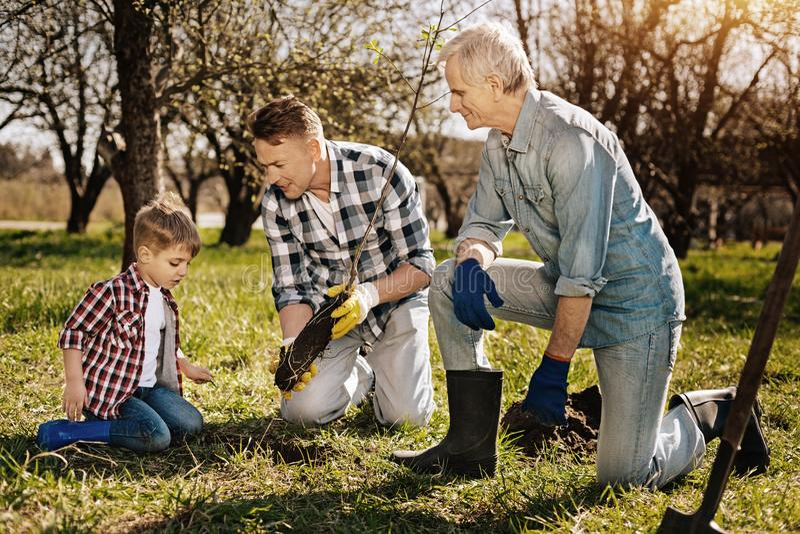 Generación tres de varón que planta el árbol joven foto de archivo