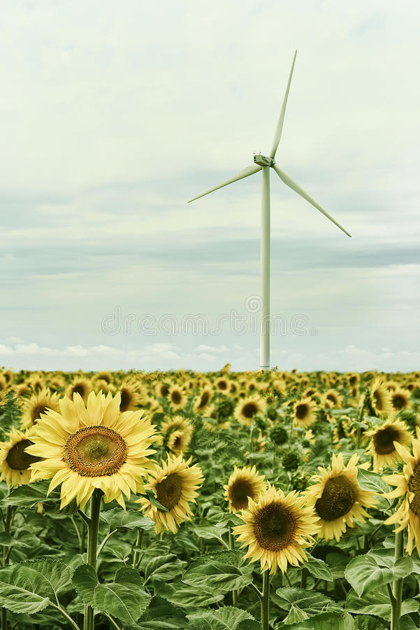 Generadores de viento en el campo de girasoles imágenes de archivo libres de regalías