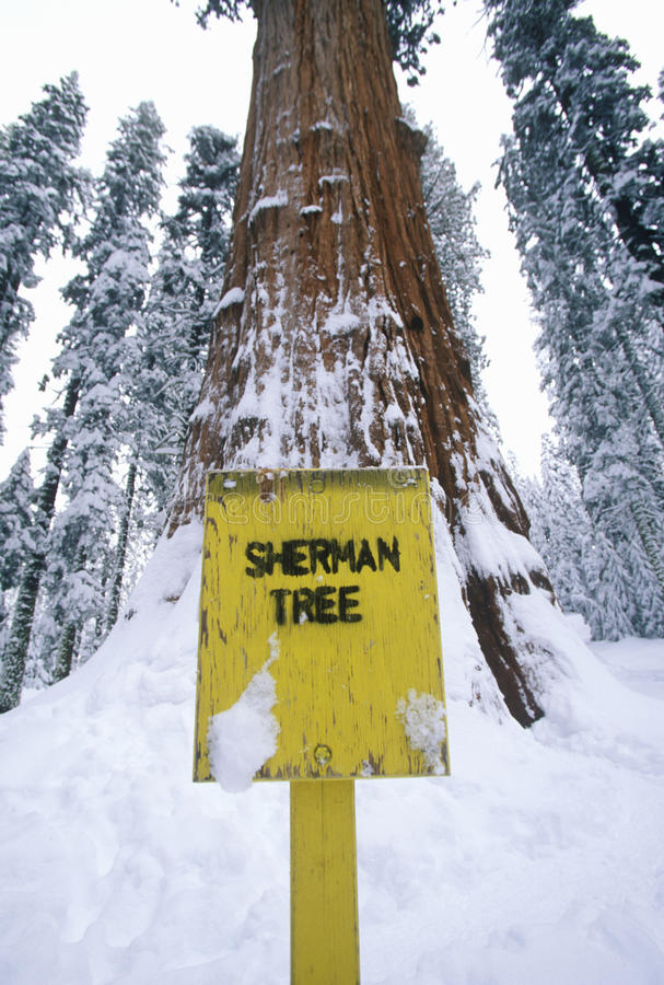 General Sherman Redwoodträd Tree Arkivbild