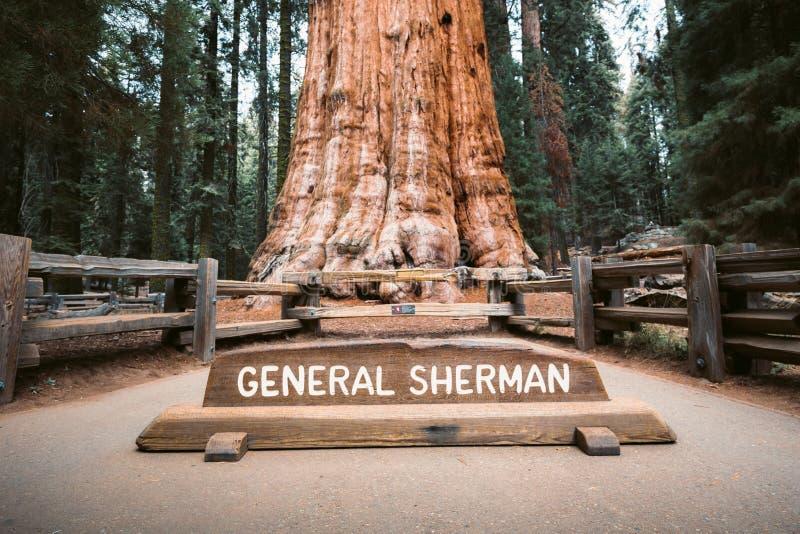 General Sherman Tree, a árvore a maior do mundo pelo volume, parque nacional de sequoia, Califórnia, EUA imagem de stock royalty free