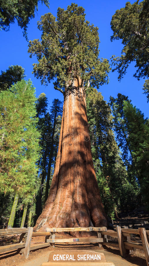 Free General Sherman Tree Stock Images - 36324144