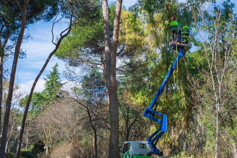 General shot of a crane with two gardener operators pruning a tree in a park in Madrid, Spain. Horizontal stock image