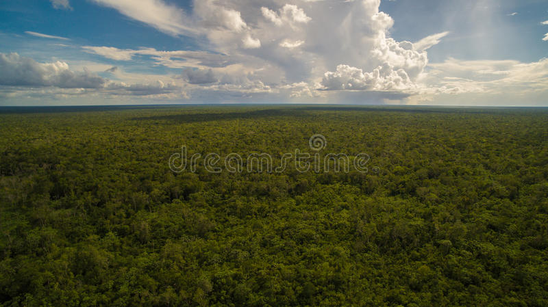 General view of the jungle. The view between the clouds in the sky & the trees in thejungle stock images