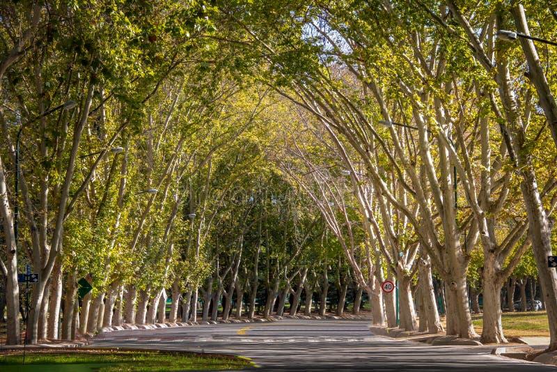 Generale San Martin Park - Mendoza, Argentina immagine stock