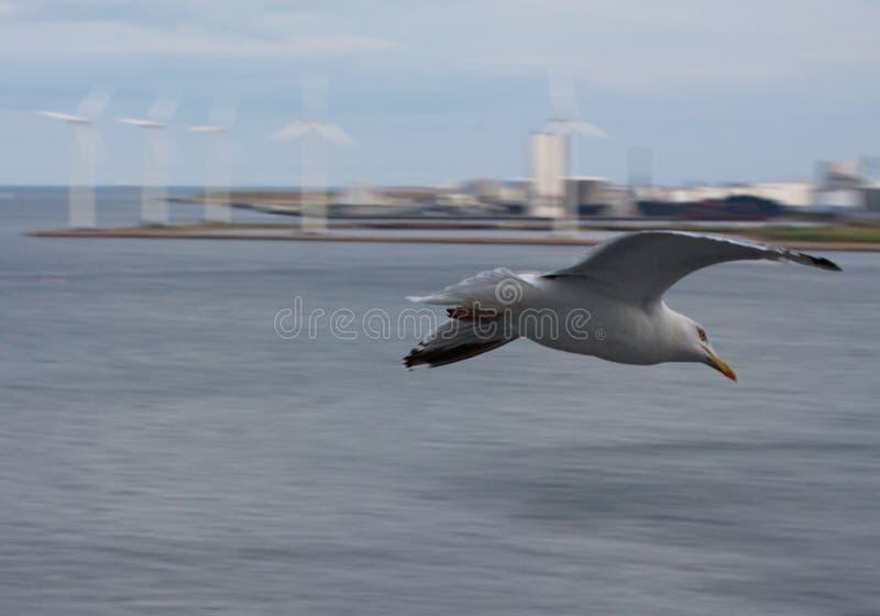 generatorów horyzontalny seagull turbina wiatr obrazy stock