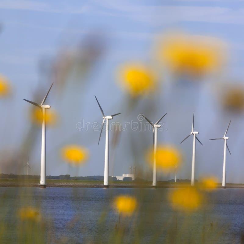 Generatori eolici contro cielo blu fuori dalla costa di Flevoland in fotografie stock