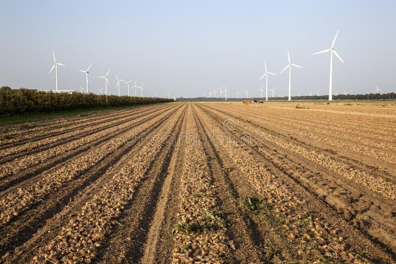 Generatori eolici e campo della cipolla nei Paesi Bassi fotografia stock libera da diritti
