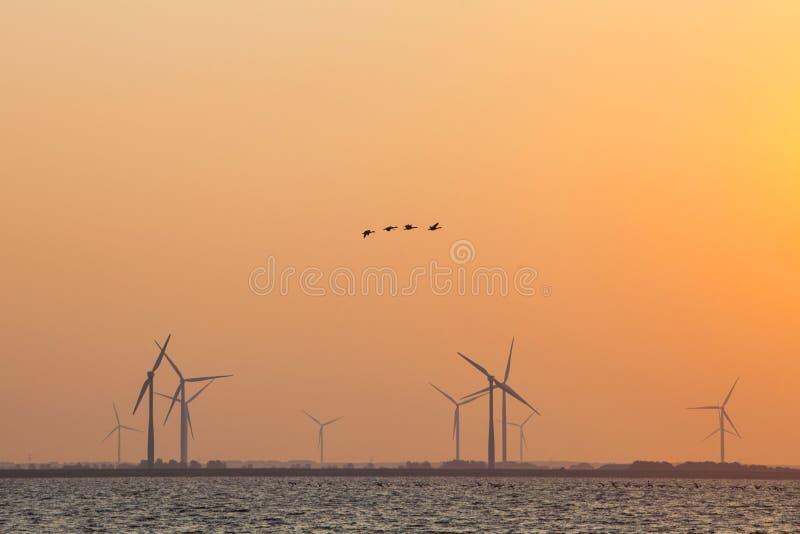 Generatori eolici ed oche in cielo variopinto immagini stock