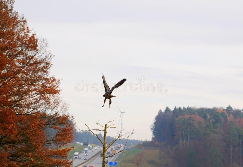 Generatori eolici ed uccelli ad alta velocità immagini stock libere da diritti