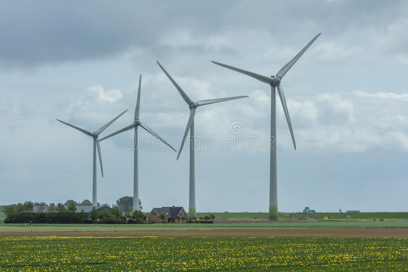Generatori eolici fra i giacimenti di fiore fotografia stock