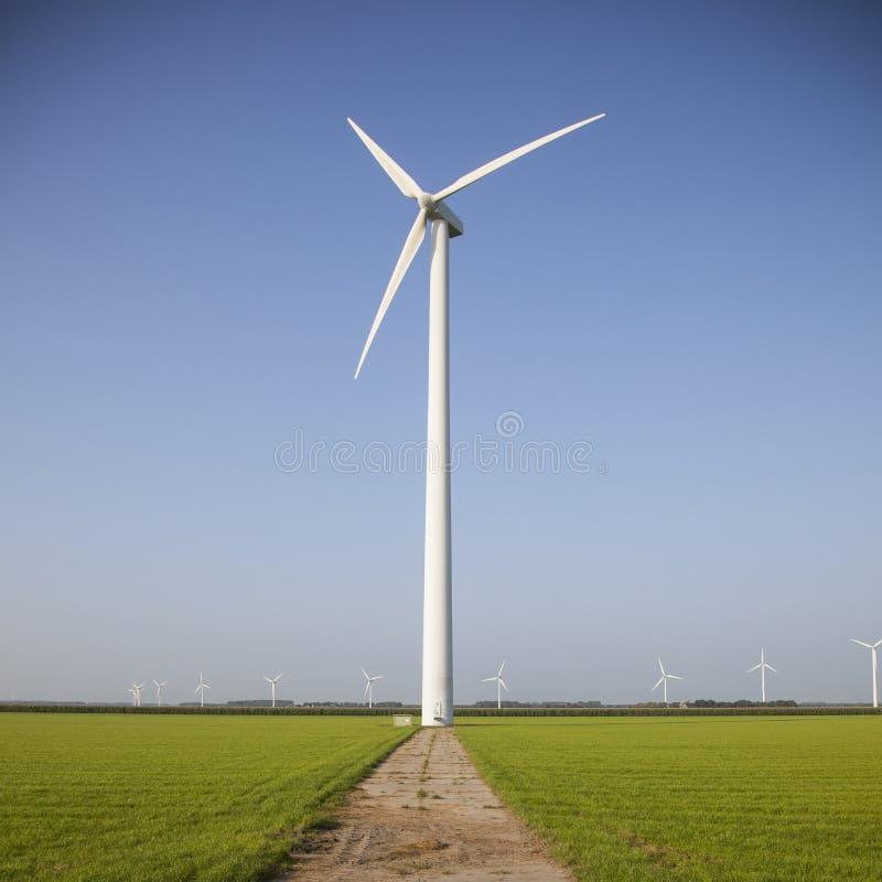 Generatori eolici nei campi verdi nei Paesi Bassi fotografia stock libera da diritti