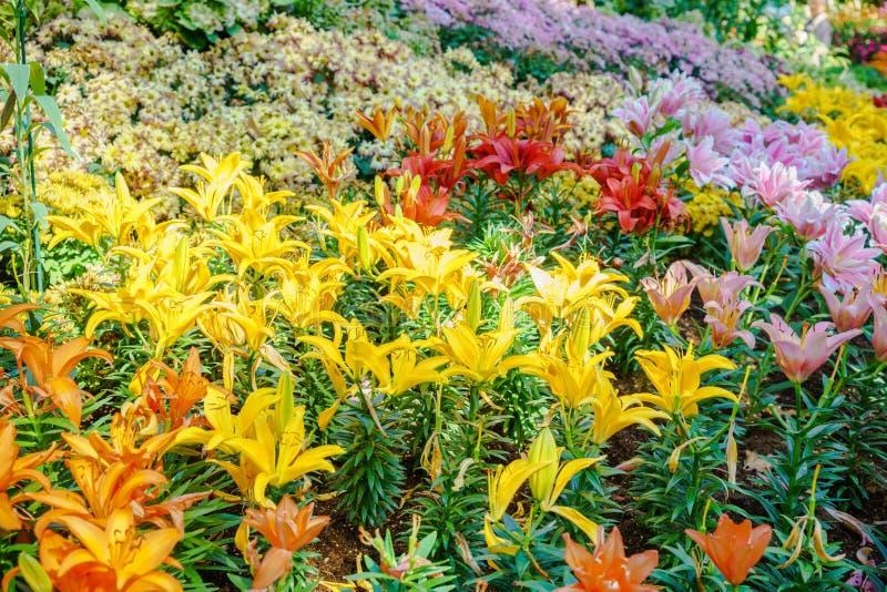 Generi differenti di fiori fotografia stock libera da diritti