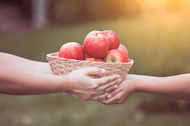Generi la mano dell'agricoltore che dà il canestro delle mele alla ragazza del piccolo bambino fotografia stock