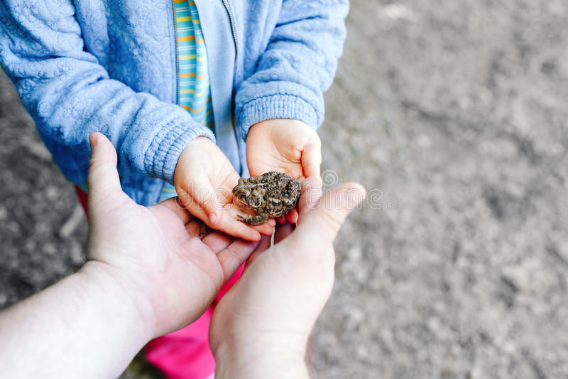 generi le mani del bambino e del genitore che tengono la piccola rana marrone verde della foresta immagini stock libere da diritti