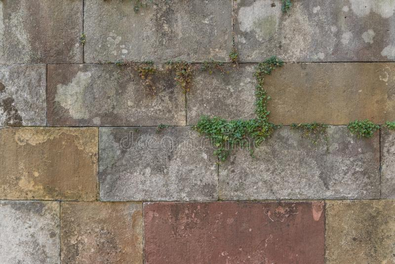 Generic background of concrete stone tiles or bricks with green clover growing in the seams in grey brown and yellow an red stones. Showing royalty free stock photo