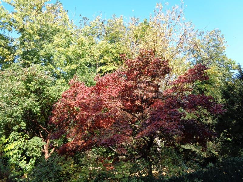 Generische vegetatie bij botanische tuin - Macea, Arad-provincie, Roemenië stock afbeeldingen