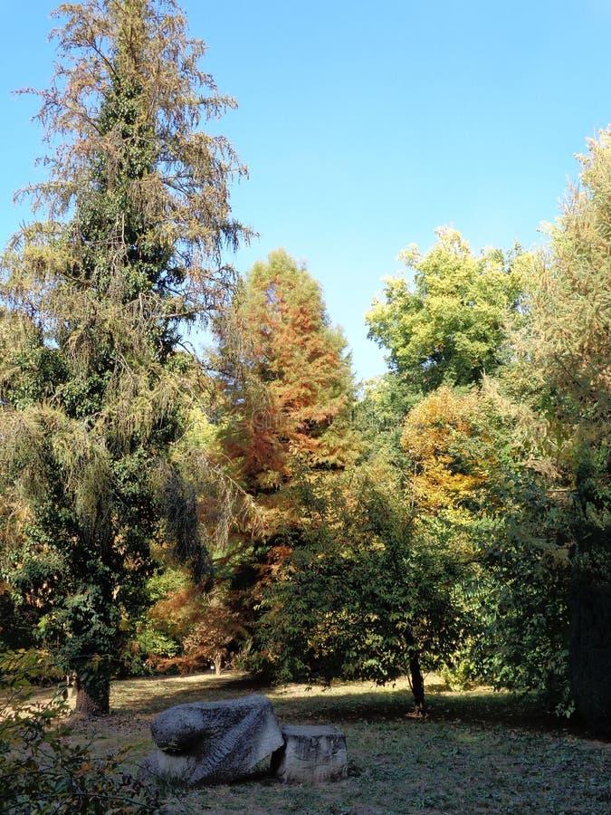 Generische vegetatie bij botanische tuin - Macea, Arad-provincie, Roemenië royalty-vrije stock foto