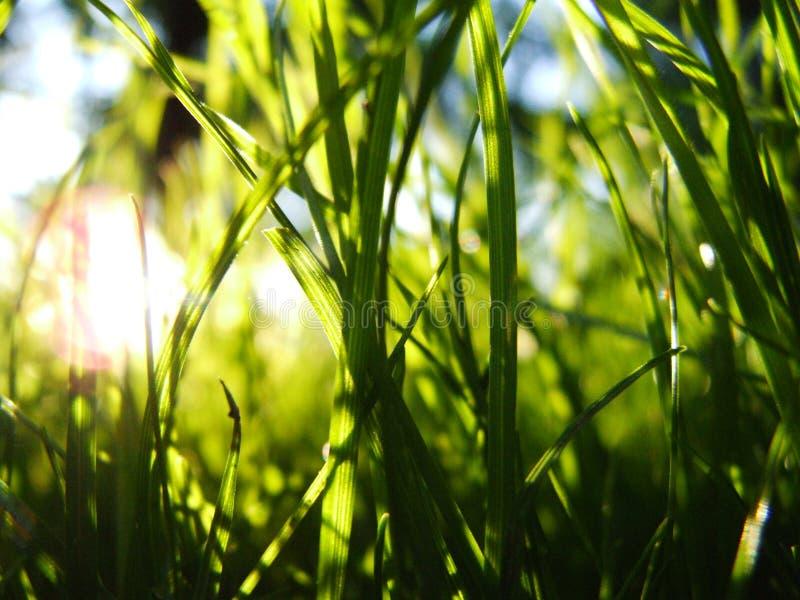 Generische Vegetation lizenzfreie stockfotos
