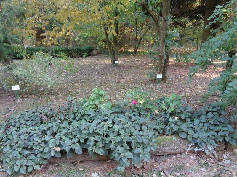 Generische Vegetation am botanischen Garten - Macea, der Bezirk Arad, Rumänien lizenzfreie stockfotografie