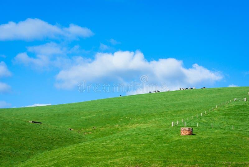 Generisk grön bergig jordbruksmark med mejerikor och blå himmel arkivfoto