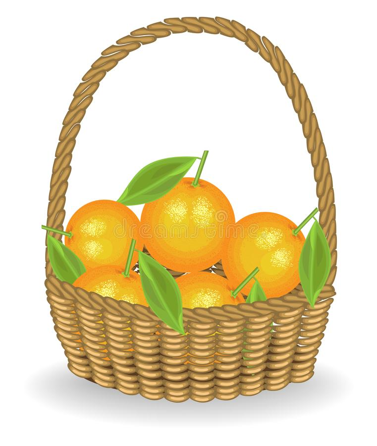 Generous harvest. Fresh juicy sweet oranges in a basket. The fruit is very tasty and vitamin. An exquisite treat for health and royalty free illustration