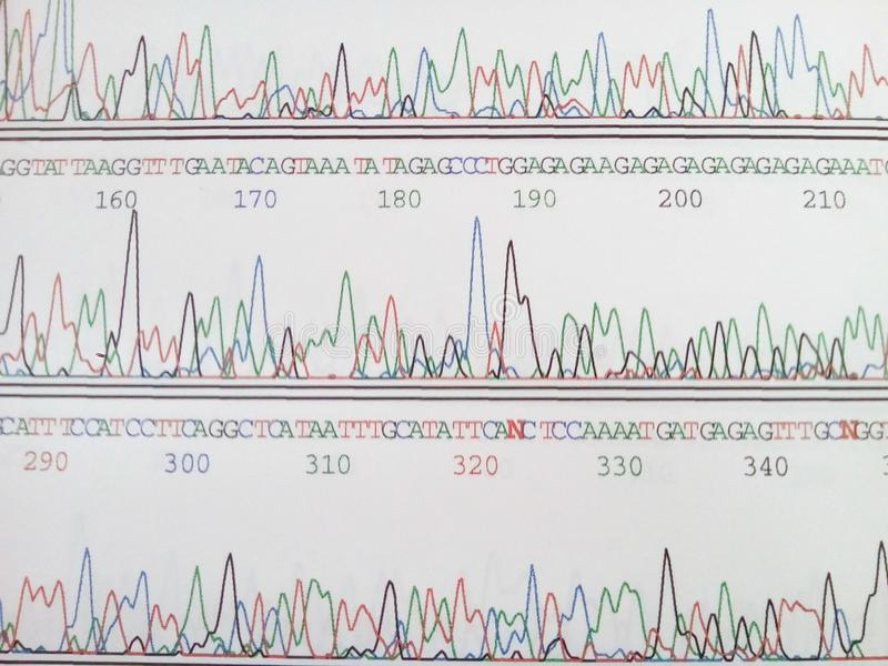 Genetic code. Electropherogram of automated DNA sequencer royalty free stock images