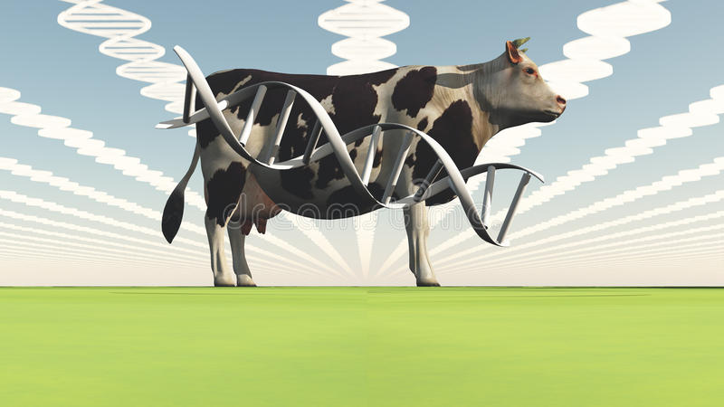 Genetically modified cow stock illustration