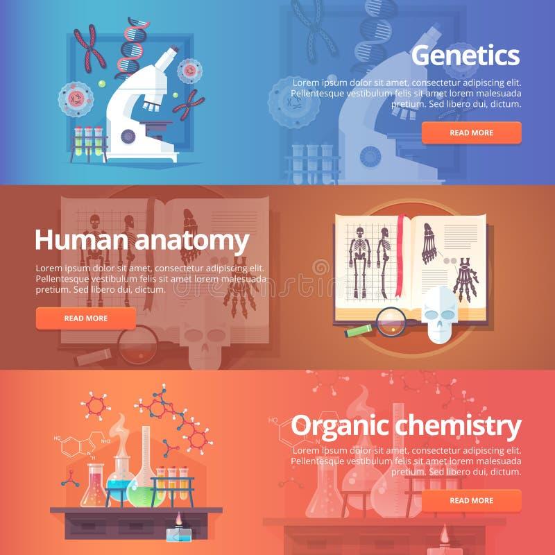 genetics GÉNOME HUMAIN Anatomie humaine illustration libre de droits