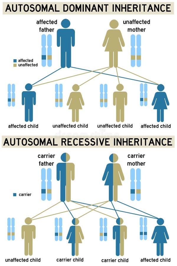 genetik stock illustrationer