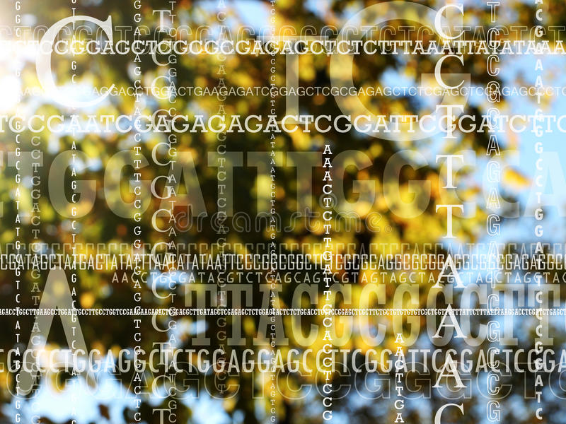 Genetik solstrålar till och med träden royaltyfria foton