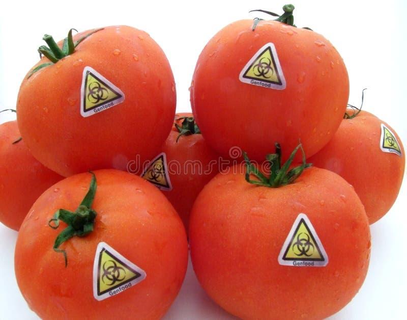 Genetische wijzigingstomaten stock foto's