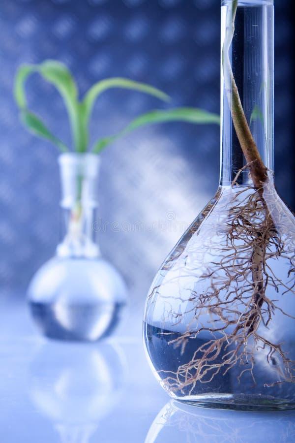 genetiskt ändra växter royaltyfria foton