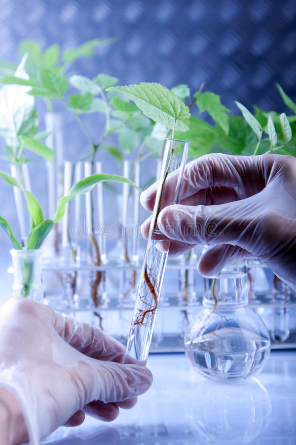 genetiskt ändra växter arkivfoto