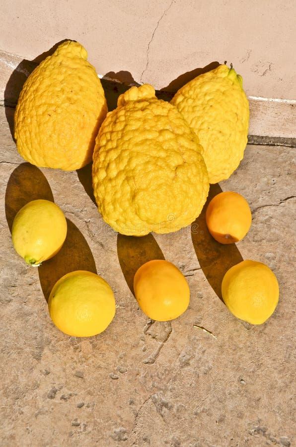 genetiskt ändrade jätte- citroner royaltyfria bilder