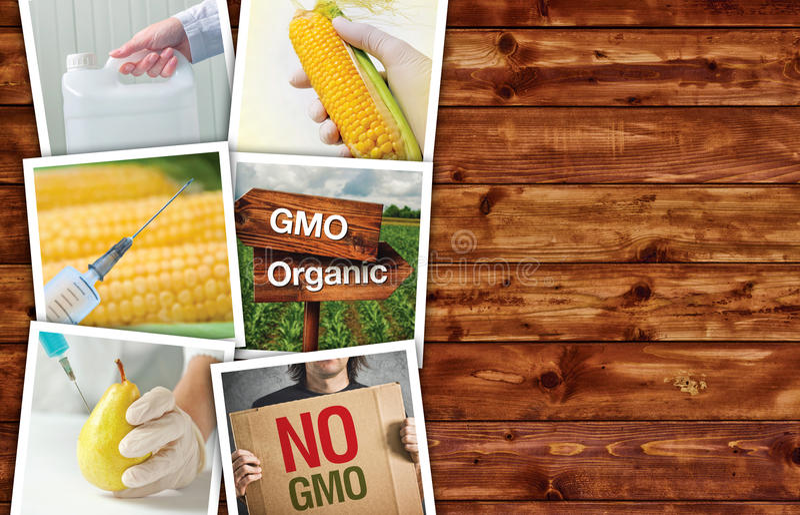 Genetyczna modyfikacja, nauka i technika w agriculturre, ph zdjęcie royalty free