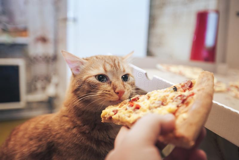 Gengibre e pizza imagem de stock