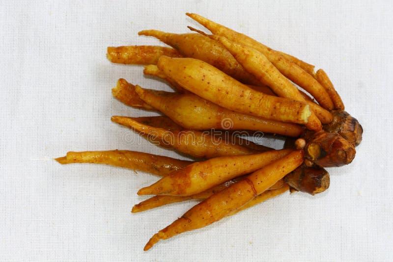 Gengibre selvagem ou pouca raiz do galangal ou Gra Chai fotos de stock