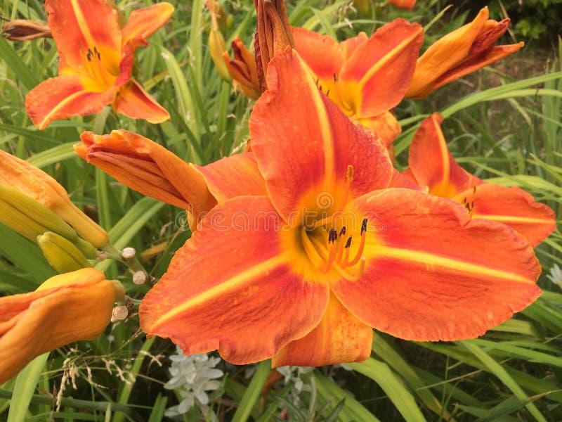Genießen der schönen Blumen am Park stockfoto