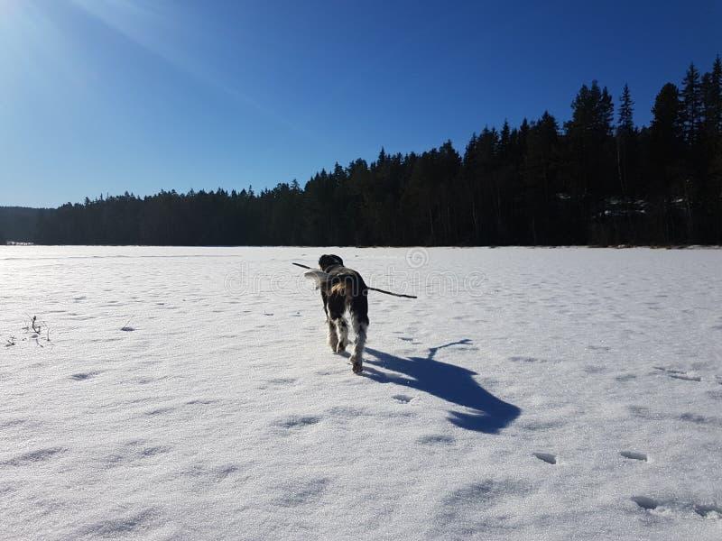 Genießen des Winters stockfotografie