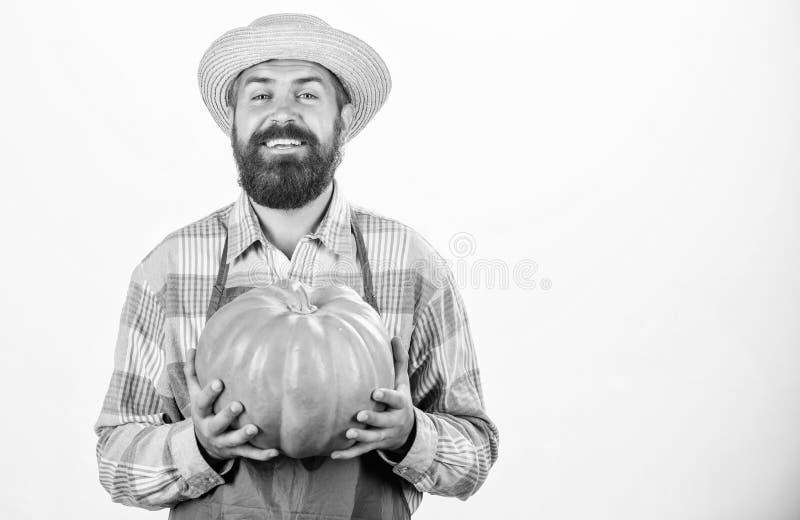 Genie?en der geschmackvollen Mahlzeit gro?er K?rbis des b?rtigen Mannlandwirt-Griffs Erntefest N?tzliches Gem?se reiche Herbstern lizenzfreies stockbild